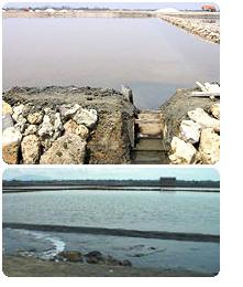 右手前が海、左手水門の向こうが最初の塩田